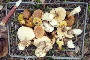 Franschhoek-fresh-produce-restaraunt